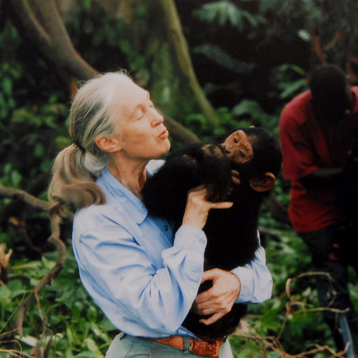 jane-goodall-disney+-luvit-documental-primatologist-ethologist-and-anthropologist-with-a-chimpanzee-in-her-arms-c-1995-photo-by-apic_getty-images